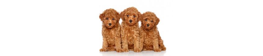 Chiots / jeunes chiens