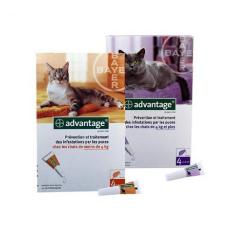 Advantage - Antiparistaire Chats