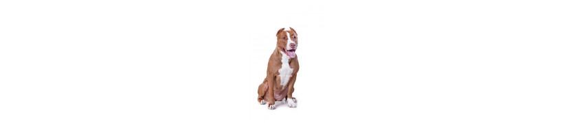 Croqadom vente en ligne et livraison de croquettes pour chiens adultes a noumea grand noumea et en nouvelle caledonie