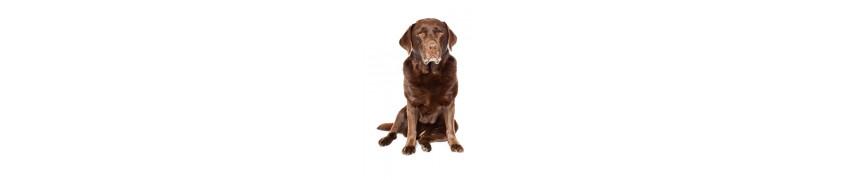 Croqadom vente en ligne et livraison de croquettes pour chiens seniors a noumea grand noumea et en nouvelle caledonie