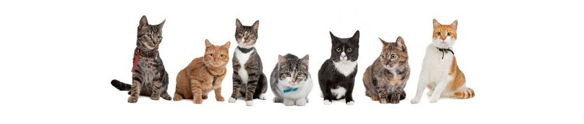 Accessoires, jouets, colliers pour chats chez Croqadom