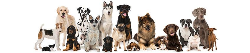 Croqadom croquettes pour chiens à Noumea grand Noumea et Nouvelle Caledonie